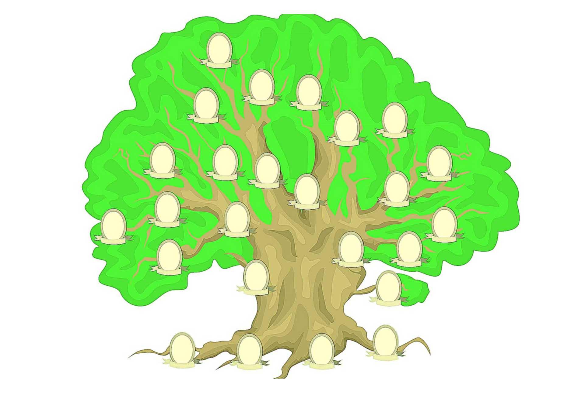Дерево жизни: история и значение